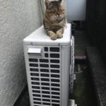 猫好き 猫ブーム
