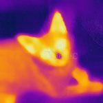 コロナ感染対策 検温のススメ FLIRでいつでも検温