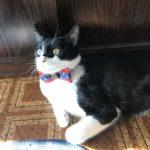 猫好き 猫ブーム 猫室内飼い